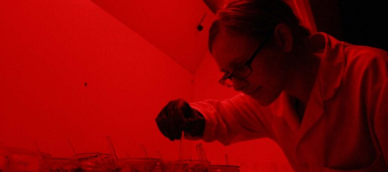 Processing luminescence samples in the red light of the laboratory